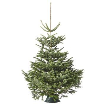 Nordmannspar Kerstboom 125-150 cm
