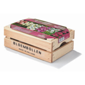 Bloembollen in houten kist roze en wit 100 stuks