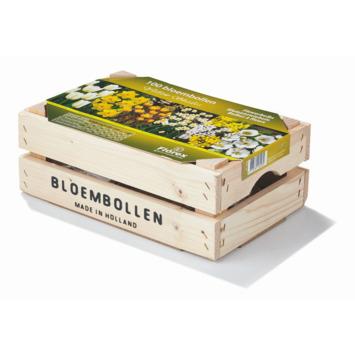 Bloembollen in houten kist wit en geel 100 stuks