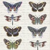 Graham & Brown vliesbehang 101499 vlinders & muziek