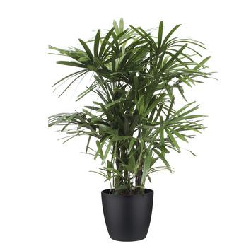 Stokpalm Rhapis Palm met Elho Bloempot Brussels Zwart