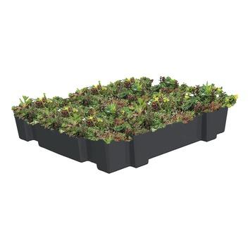 Aquaplan Aquaplant groen dak op tray 37x57 cm