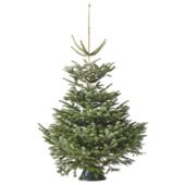 Kerstboom Nordmann 175-200 cm
