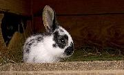/konijnenhok